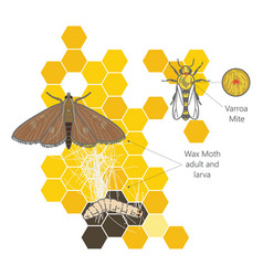 wax moth larvae on an infected bee nest terrible vector image