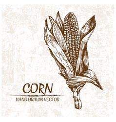 digital detailed corn hand drawn vector image vector image
