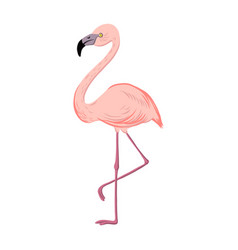 drawing flamingo vector image