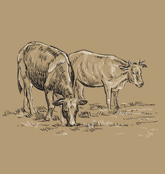 Hand drawing cows vector