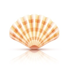 Shellfish seashell isolated vector
