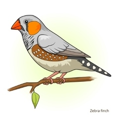 Zebra finch bird educational game vector image