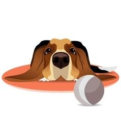 Sad basset hound on circle mat and ball vector image