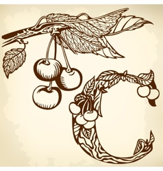 branch of cherry brown vector image