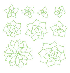 green linear succulent plant set on white vector image