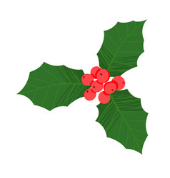 little branch holly berry on white background vector image