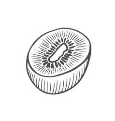 monochrome kiwi vector image