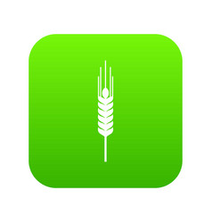 stalk of ripe barley icon digital green vector image