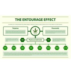 Entourage effect horizontal infographic vector