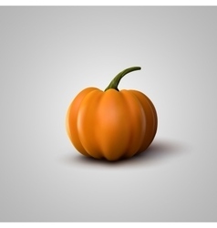 Of Realistic Pumpkin vector image