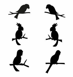 Parrots Silhouettes vector image