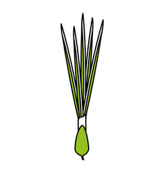 scallion vector image