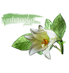 white watercolor flower with leafs vector image