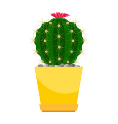 cactus with pink flower vector image vector image