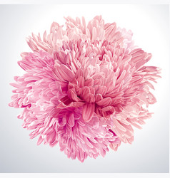 pink asters and chrysanthemums sphere vector image vector image