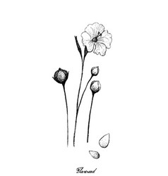 Flax or linum usitatissimum plant with seed vector