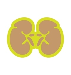 Icon of human kidney in flat style vector