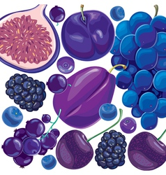 Mix blue and lilac fruits and berries vector image