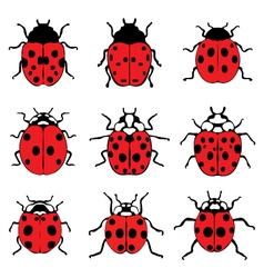 Red ladybugs 9 vector