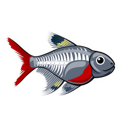 X-ray tetra cartoon fish vector