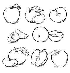 Apple with leaf Hand drawn sketch style fruits vector image vector image