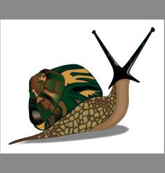 Isolated snail vector