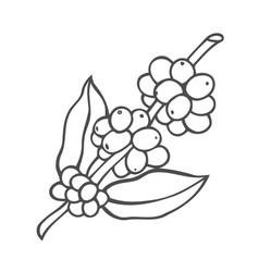 line icon of coffee tree vector image