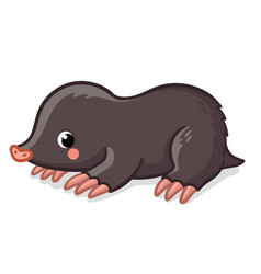 Little cute mole on white background vector
