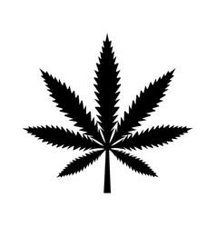 marijuana leaf medical cannabis detailed black vector image