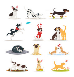 Set of different dog breeds vector