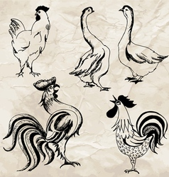 Birds02 vector
