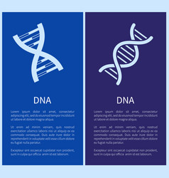 dna set of white spirals isolated on blue backdrop vector image vector image