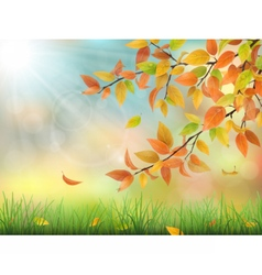 Autumn leaves grass and drops vector image