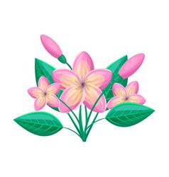 Frangipani tropical plant vector