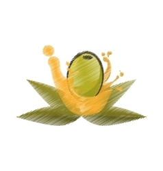 Olive leaves oil splash drawing vector