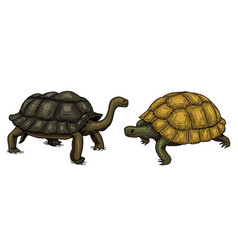 Tropical turtle and tortoise shell animals vector