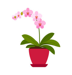 orchid pink house plant vector image
