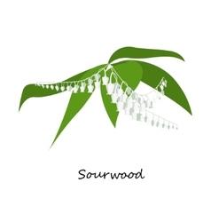 Sourwood tree blooms wild flower vector