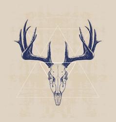deer skull vector image
