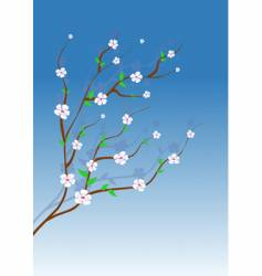 Almond tree vector