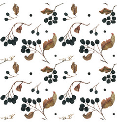 Aronia branches dried berries and leaves vector