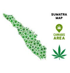 Cannabis collage sumatra island map vector