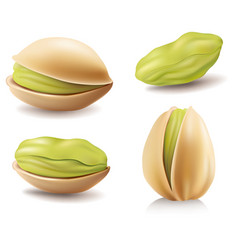 group of different pistachio nuts vector image