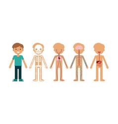 Boy body anatomy cartoon vector