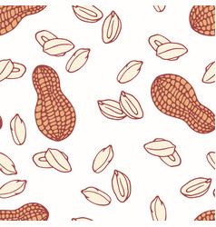 hand drawn seamless pattern with peanut vector image