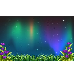 Night view vector image