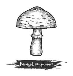 Parasol mushroom sketch vector