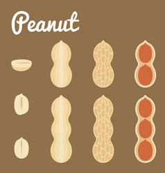 Peanuts of a set of peanuts vector