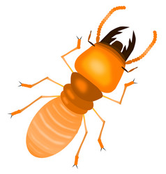 termite with white back groundcartoon style vector image