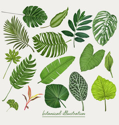 Tropical leaves botanical vector